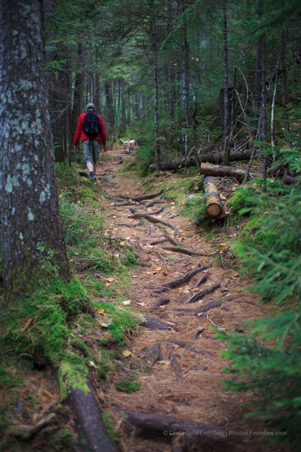 Differing terrain along the trail.