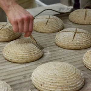 Bread dough at Seven Stars Bakery