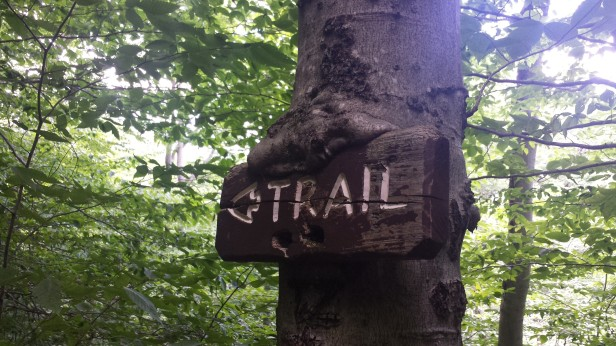 This tree has already started to grow around this trail marker. Most of the trail is marked with paint, though.