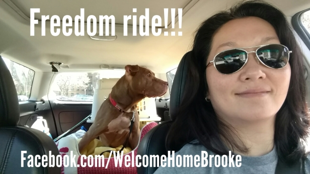 Brooke freedom ride